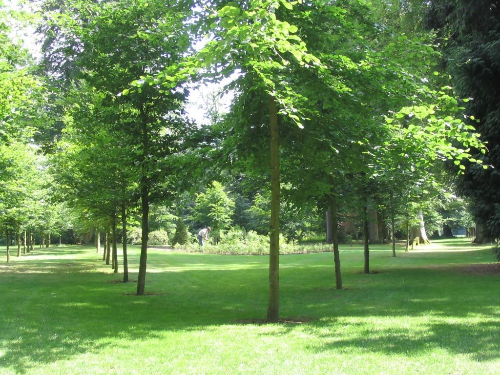 Park de Haere 2